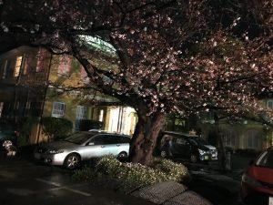 夜桜と、古いけどニュー鎌倉