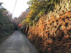 樹ガーデンをめぐる冒険 vol.2(横須賀線とシン・ゴジラ)