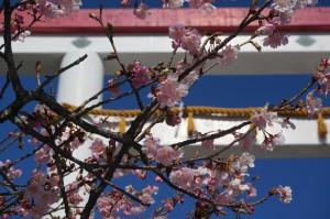 3/11 桜咲く鎌倉宮にて