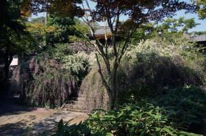 お寺さん訪問 扇ガ谷海蔵寺