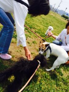 「犬と朝から遊ぼう」参加者、犬ちゃん 募集中
